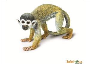 Squirrel Monkey (1 I)