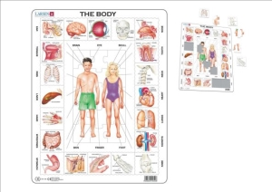 (SP) Our Body Puzzle