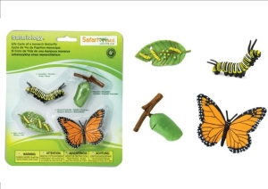 Life Cycle of Butterfly (3 I)